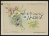 Wild flowers of America : flowers of every state in the American Union. Vol. 1., No. 12