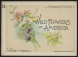 Wild flowers of America : flowers of every state in the American Union. Vol. 1., No. 13